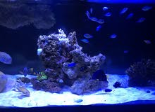 حوض سمك بحري ( 2 متر )