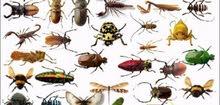 شركة الهدهد لمكافحة الحشرات والقوارض