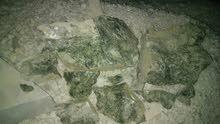 جرانديرتي حجركريم للبيع