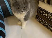 قطط عدد 2