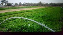 قطعة ارض طينيه في ازدو سوق