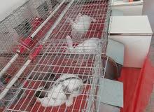 بطاريات واقفاص ارانب للبيع