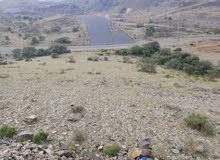 أرضية شمال مدينه ابها بمخطط ال يوسف تبعد عن مصلى العيد 8كم متر