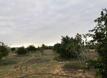 قطعة أرض للبيع بعد التاجوري