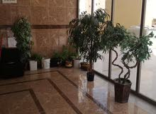 Apartment property for rent Al Ahmadi - Fintas directly from the owner