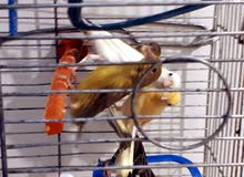 عصافير كنار بجنن زي الفل