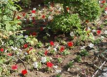 تنسيق حدائق ابومحمد