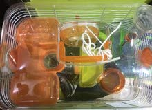 2 cages and 2 female hamsters for rehoming