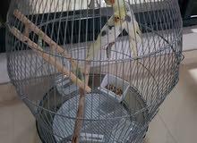 قفص طيور وسط وكبير