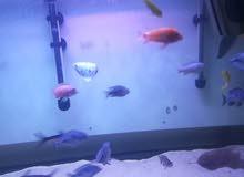 حوض سمك أجنبي