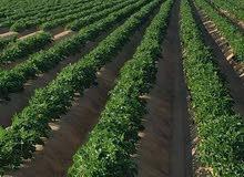 موقع متميز لاستصلاح و تقسيم الاراضي الزراعية للبيع