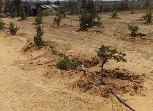 قطعة ارض في بير عزالدين