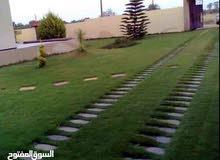 عشب طبيعي درجة أولي و تركيب شبكات ري