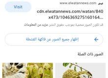 ابحت عن فاكهة القشطة اليمني
