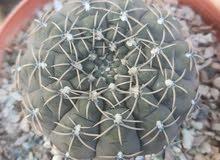 جميع انواع نباتات الزينه للبيع الاسعار مختلفه على حسب نوع النبات