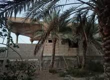 بستان مميز للبيع في ابو الخصيب