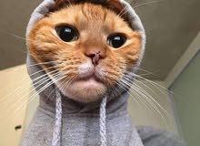 اريد قط او قطة للتبني
