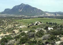 A vendre terre agricole situé à morneg bn arous a caute de Jbel rsas