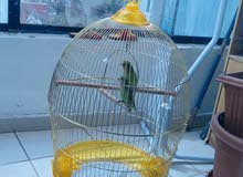 Large Golden Cage With Stand only