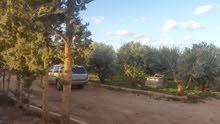 مزراعه 6000 متر طريق بوهادى الضبعى فيها اشجار مثمره زيتون ورمان وعنب