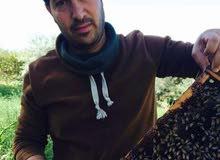 خلايا نحل للبيع عسل حبوب لقاح غذاء ملكي شراء وبيع مستلزمات النحل
