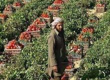 استثمر صح  وخليك ف امان تملك قطعه ارض زراعيه 30 فدان ع طريق مصر الفيوم