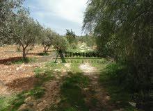 ارض للبيع في جنوب عمان الصلاحية مساحة الارض 10 دونم