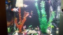 حوض سمك اجنبي 50 لتر للبيع مع كامل اغراضو مع السمك