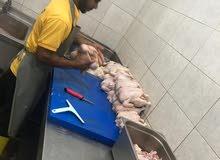 تشفية دجاج