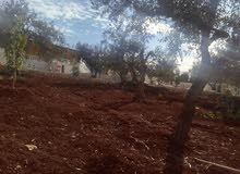 مزارع وشاليهات خشبيه وسندوش بانيل