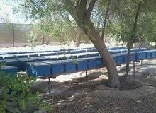 مناحل الامارات لتربية النحل و انتاج العسل