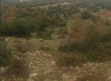 ارض للبيع غرب راس منيف في منطقه(المرجم)