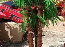 3 اشجار اصطناعية