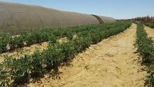 مزرعه 100 فدان للبيع