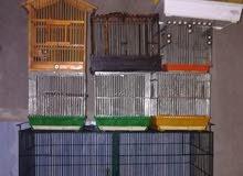 مجموعة قفاص مطير صيني كبير وقفاص حساسين السعر 50 دينار(0788110893ن