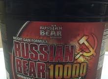 بروتين الدب الروسي جدد
