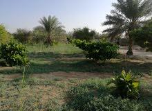 اراضي زراعية في ابومعن علي طريق ابوحدرية