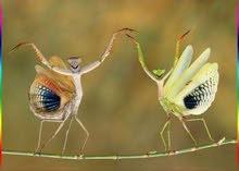الابداع لمكافحة الحشرات والتنظيفات
