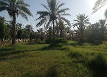 بستان 2 دونم في كربلاء