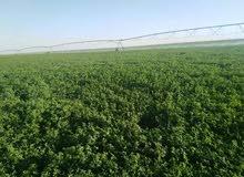 مزرعة رائعة بالكيلو 30 شريان الشمال ناصية تاني مزرعة من التفتيش