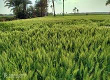 10فدان ارض زراعية