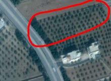 قطعة ارض للبيع ( طريق ام قيس الرئيسي / سما الروسان ) - اربد