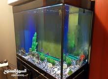 حوض سمك كبير جدا