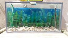 عدد 2 حوض سمك للبيع