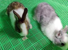 ارانب الوان مختلفه rabbits different color