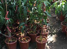 نباتات طبيعي