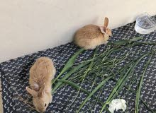 healthy and active cute rabbits pair with new big cage