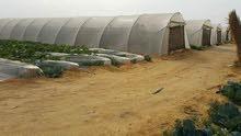 ادفع 35الف واستلم فدان مزروع ومسجل من شركة ارض زراعيه.   رى نيلى