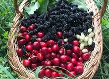 أرض زراعية في أرمينيا للمشاركة او الشراء