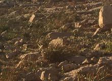 قطعة ارض للبيع في حوض ابو القرام شفا بدران